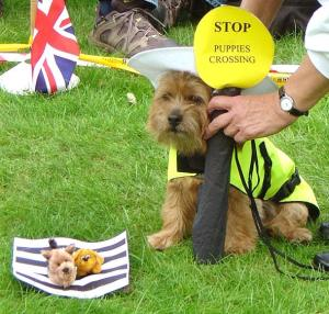 Puppy Crossing Patrol