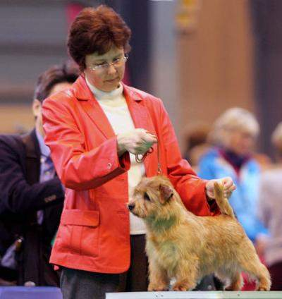 BEST OF BREED  BITCH CC BELLEVILLE HONEY NUT CRUNCH  with Cathy Thompson-Morgan Photo Baerbel Lang