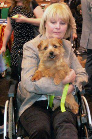 BITCH RCC   CH KINSRIDGE TOP SCORE  with Diane Jenkins  who had broken her ankle and was in a wheelchair.