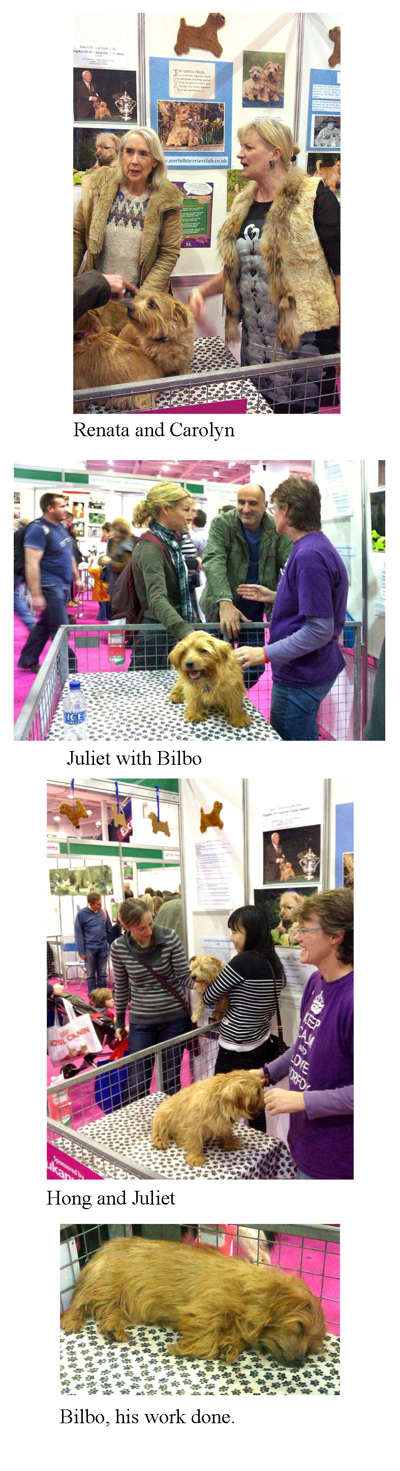 Discover Dogs 2013 London