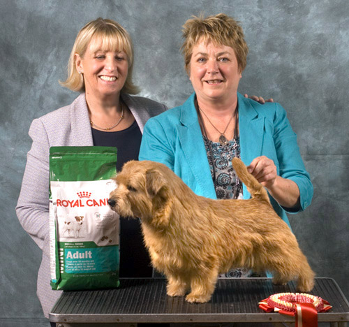 BEST IN SHOW & DOG CC BLAKENS XPRESS YOURSELF with Jackie Phillips
