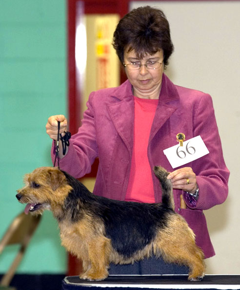 BEST BLACK AND TAN IN SHOW:  BELLEVILLE SEDUCTION with Cathy Thompson-Morgan