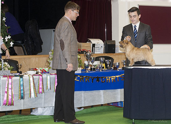 Junior Handler judged by Andrew Gullick