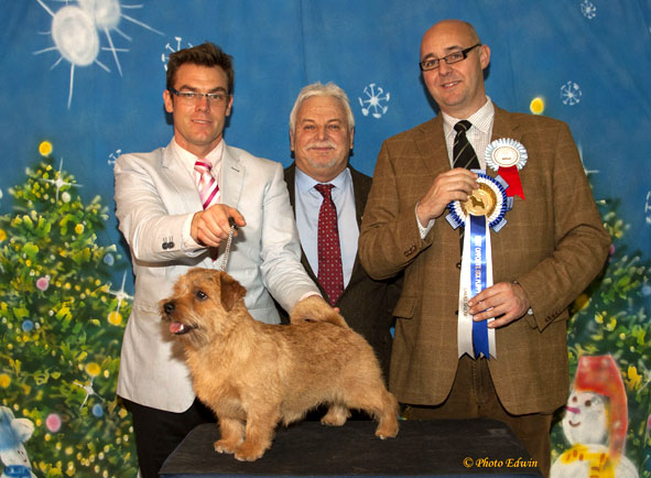 BOS PUPPY: Jiffy Golden Go to Jaeva with Andrew Gullick and Martin Phillips