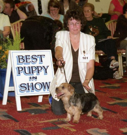 Cathy Thompson-Morgan's Belleville Another Angel is Best puppy.