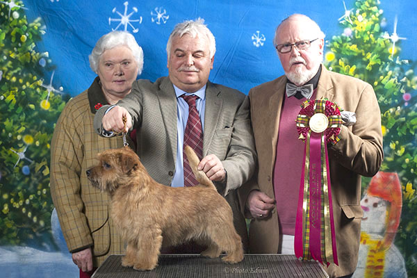 The Best in Show winner and Best Dog: JAEVA CUFFLINK with Martin Phillips & Mrs Kate Tate