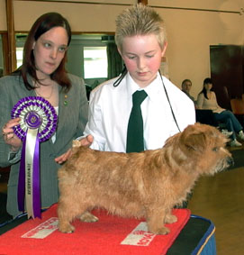 Best Junior Handler12-16 years was Kristian Hitchin  with Kreating Kaos.  Together they also won the Undergraduate  and Special Beginners, bitch classes.  Kristian was also a Steward for the show.  The Judge was Zoë Wilding