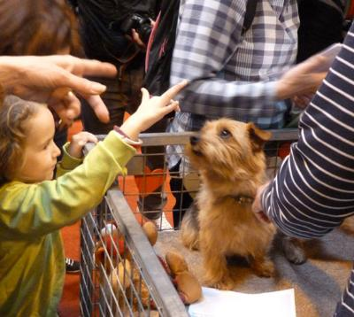 Scenes at Discover Dogs