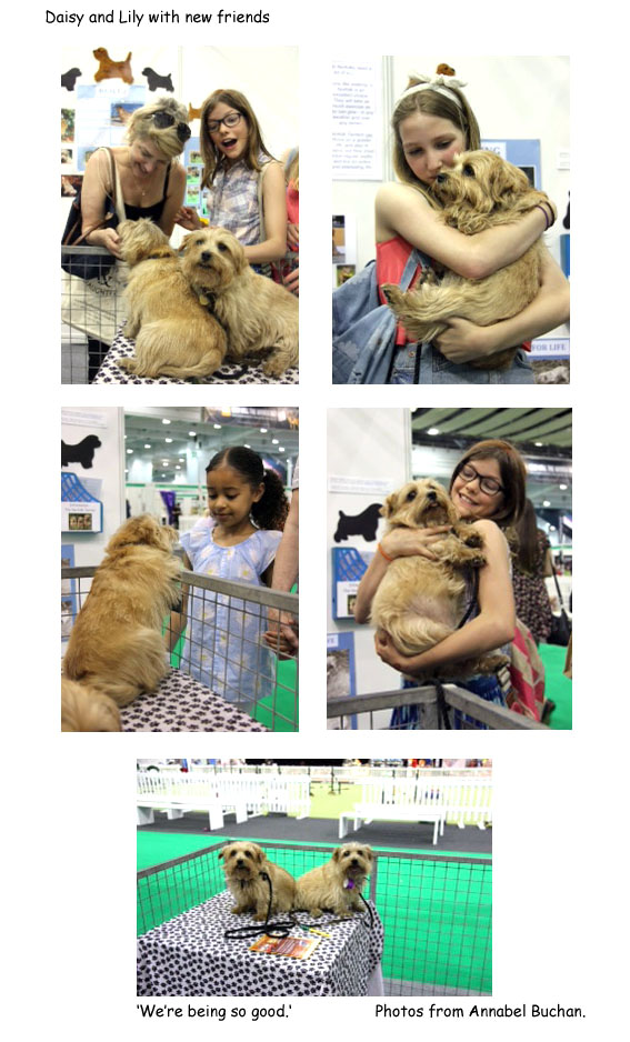 Discover Dogs 2014 London