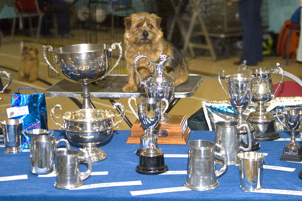 Guarding the trophies
