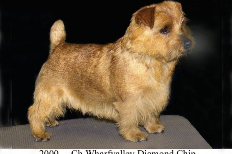 2000 Ch Wharfvalley Diamond Chip