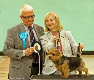 BEST PUPPY: BELLEVILLE CHARLIE'S ANGEL with Christine Hitchen and judge